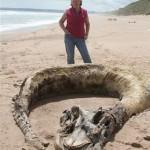 Il presunto mostro marino trovato in Scozia