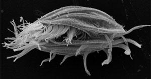 Un microorganismo