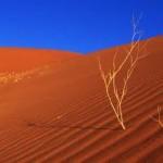 LE DUNE DEL DESERTO DELLA NAMIBIA