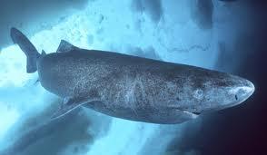 In alaska caccia al mostro del lago iliamna for Grosso pesce di lago