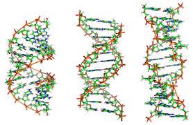 IL DNA DELL'E.COLI CREATO IN LABORATORIO