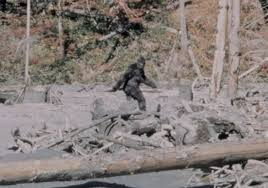 LA CREATURA RIPREAA NEL VIDEO PATTERSON-GIMLIN