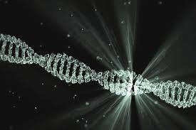 IL DNA DEGLI EMBRIONI È STATO MANIPOLATO CON LA TECNICA CRISPR